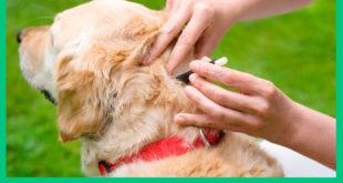 Как оградить собаку от блох и клещей